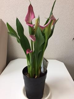 来年も花咲いてくれるかな?