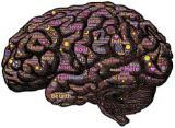 脳下垂体の腫瘍?プロラクチンが高い
